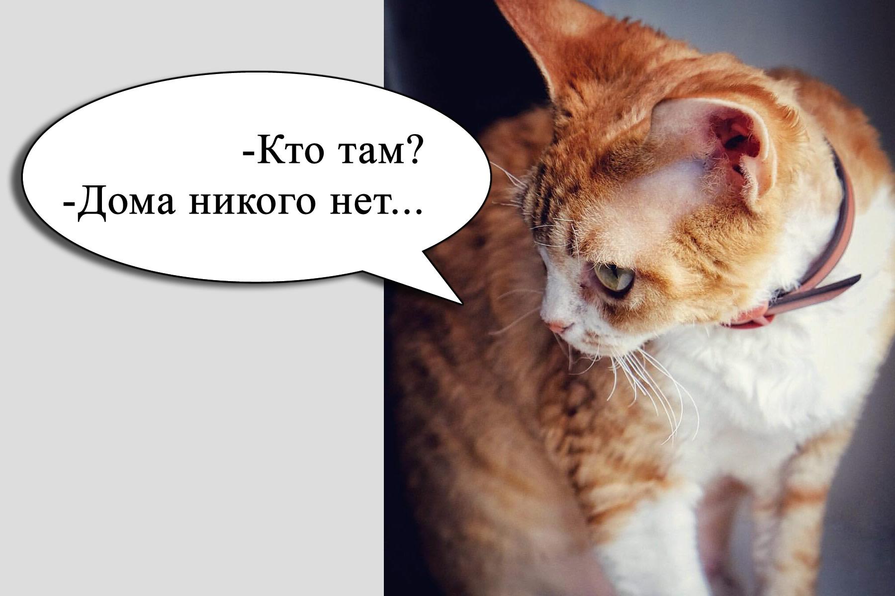 кот отвечает коллекторам
